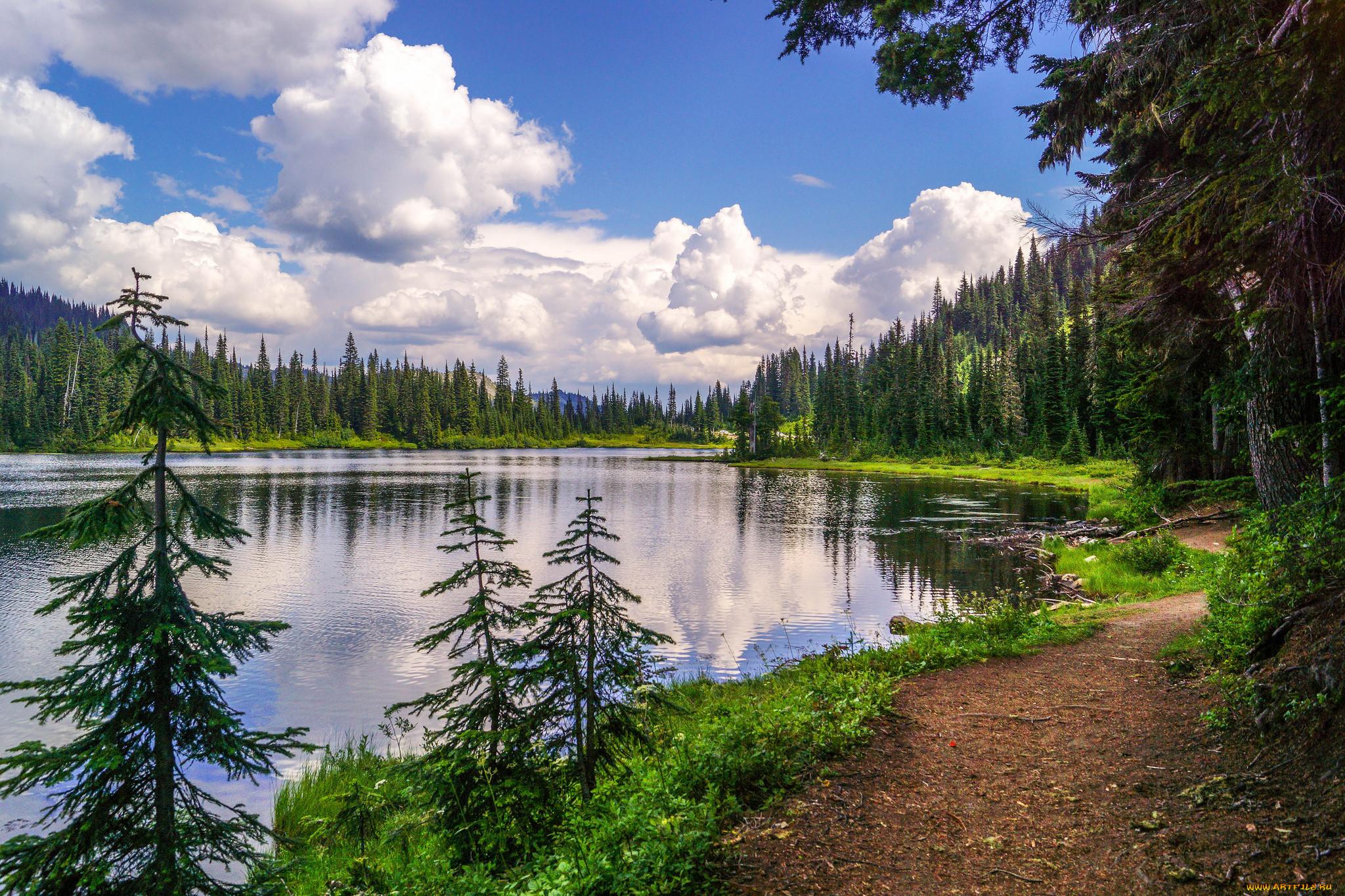 Картинки природа река в лесу